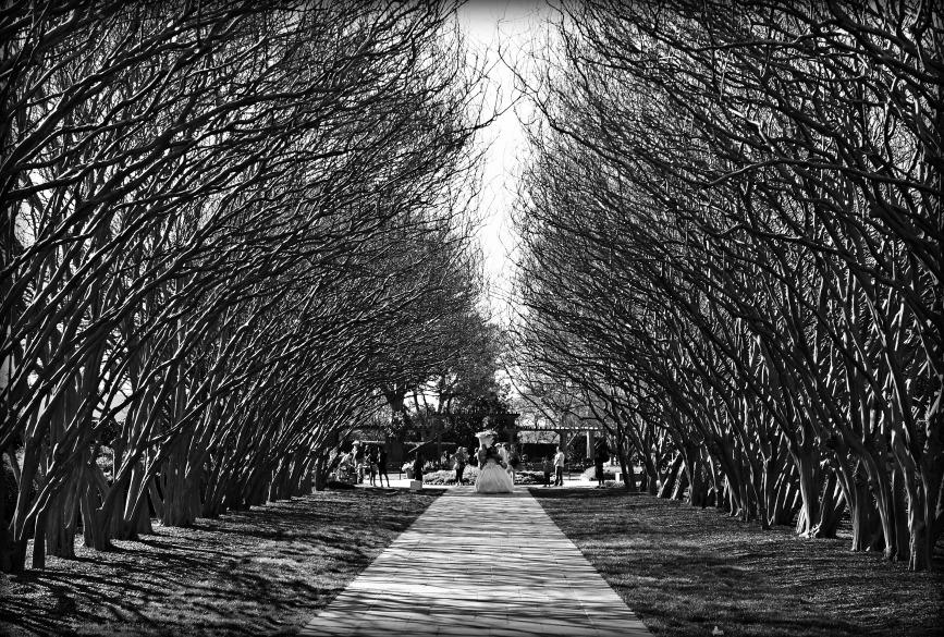 Picture was taken in Dallas Arboretum